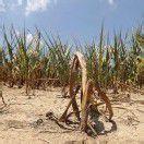Schwerste Dürre in den USA seit 25 Jahren