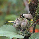 Hungrige Mäuler warten auf Futter