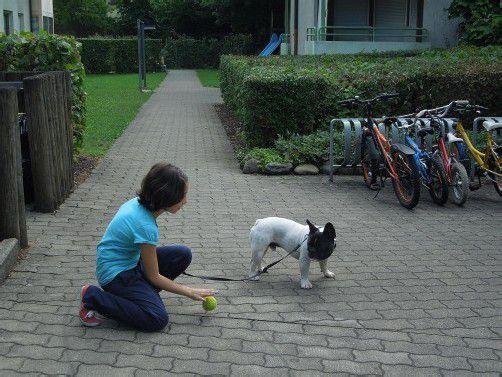 Forderung: Für Hunde sollte es auch Freiräume geben. Foto: cth