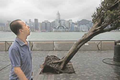 """Hunderte Bäume wurden durch den Taifun """"Vicente"""" in der Millionenmetropole Hongkong entwurzelt. Foto: REUTERS"""