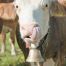 Glockenverbot für alle nachtaktiven Kühe