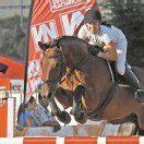 Pferdesportklassiker in Langenegg
