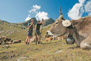 Seit dieser Woche sind alle bewirtschafteten Alpen belegt