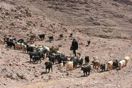 Barbara Anna Husar und ihre Ziegenherde im Wadi Hammra, dem roten Tal. Elvira Häusle
