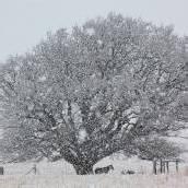 Schneefall in Johannesburg