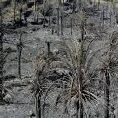Erholung vom Brand dauert über 100 Jahre