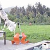 Aufregung um Hirschabschuss in Batschunser Wohngegend