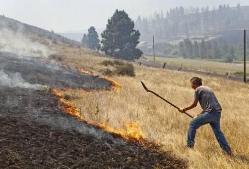 Die meisten Brände werden derzeit in Kalifornien verzeichnet.