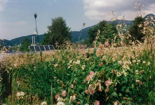 Eine wunderschöne Blumenwiese als Firmendach: Die Verpackungsexperten bei Giko in Weiler wollen Lebensräume schaffen. Fotos: Giko