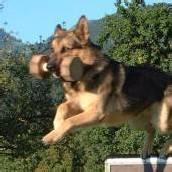 Intern. Hundeturnier um Pfänderpokal