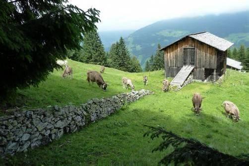 In Tschagguns gibt es 41 Natursteinmauern. Foto: BOKU