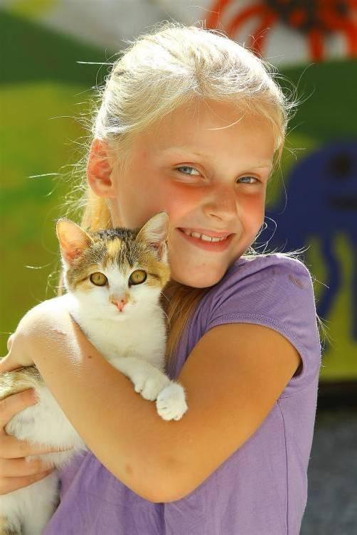 Tierbaby Kätzchen Trena 13 Wochen alt; Joyce 7 Jahre alt aus Fußach; Infos Tierheim Dornbirn;