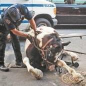 Cowboy-Szenen mitten in New York