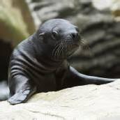 Robben-Baby wieder wohlauf