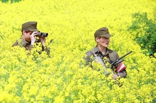 Am 20. Jänner wird über die Zukunft des Heeres abgestimmt. Foto: apa
