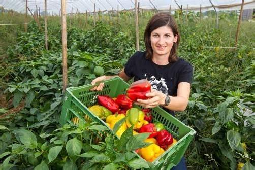 Angebot steht: Bio-Gemüse für öffentliche Einrichtungen. Foto: Steurer
