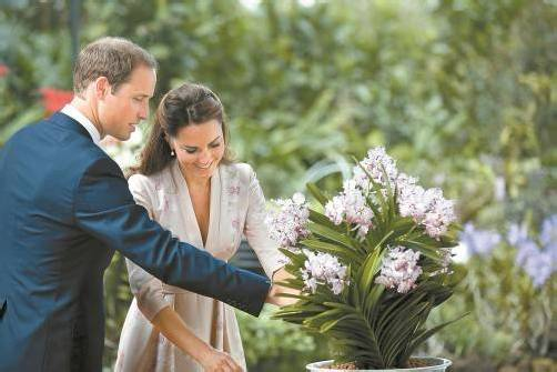 Bei der Orchideentaufe in Singapur bezauberte Kate in ihrem Kleid im Kimono-Stil nicht nur ihren Prinzen. FotoS: AP