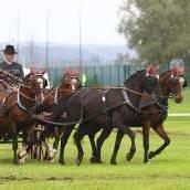 Vier Tage Pferdesport bei Bregenz Classic