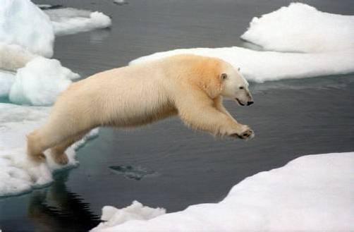 Die drastische Eisschmelze am Nordpol ist ein Märchen. Das Gegenteil ist der Fall. Foto: dpa