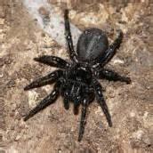 Aufruf zur Jagd auf Giftspinnen