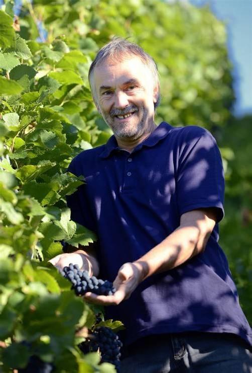 Mit dem Traubengut seiner Röthner Weinberge ist Franz Nachbaur heuer zufrieden. Jetzt kann gelesen werden. Foto: Stiplovsek