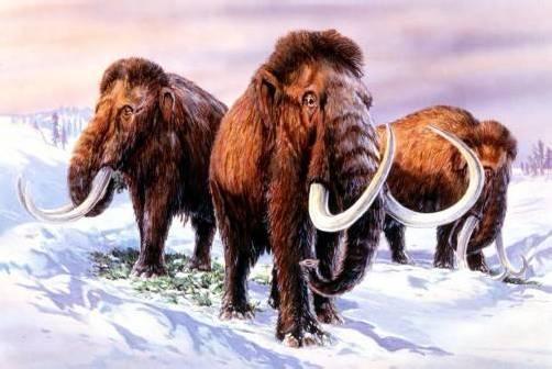 Objekt der wissenschaftlichen Begierde: Mammuts. Foto: APA