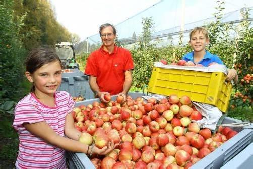 """Obstbauer Jens Blum mit Kindern Emilia und Paul: """"Elstar ist die beliebteste Sorte."""" Foto: VN/Hofmeister"""