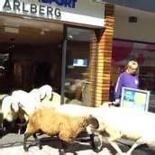 St. Anton: Tierischer Besuch in Sportgeschäft