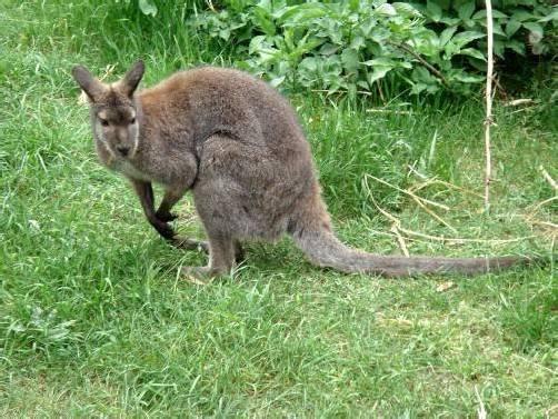 Wo das Känguru nun ist, wissen die Beamten nicht. Foto: DPA