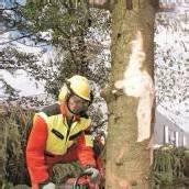 In guten Händen Ländle-Wald auf hohem Niveau /A5