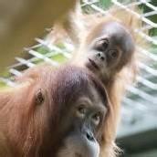 Präsentation im Zürcher Zoo