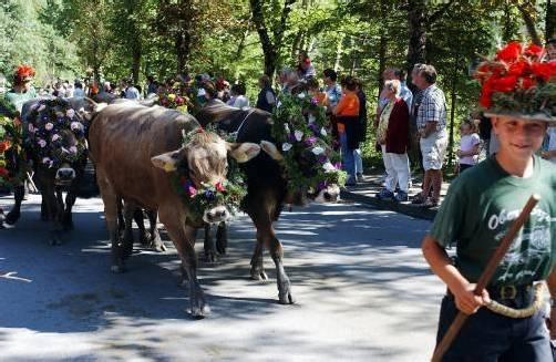 Über 400 Alptiere werden am Samstag ins Tal getrieben.