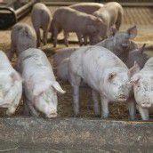Geld für tiergerechte Ställe