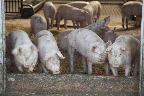 Besonders tiergerechte Ställe werden hoch gefördert. Foto: VN