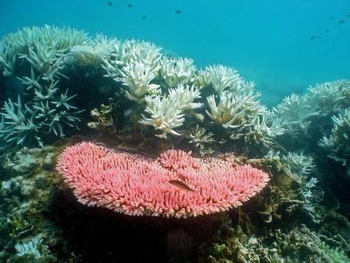 Das Great Barrier Reef ist das größte Korallenriff der Welt. In den vergangenen 27 Jahren ist der Bestand um über 50 Prozent geschrumpft. EPA