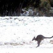 Schnee in Australien: Kältester Oktober seit vierzig Jahren