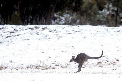 Ein ungewöhnlicher Kälteeinbruch hat Canberra und New South Wales Schnee beschert. Foto: EPA