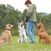 Vorsicht Hund Mehr Verständnis, weniger Bisse /A7