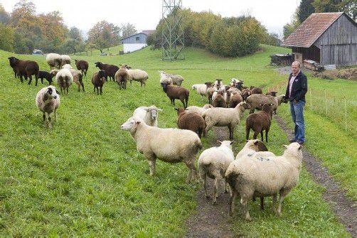 Im hinteren Teil der Weide fand Bernd Bechter am Montagmorgen eines seiner Schafe tot vor. Foto: vn/hartinger