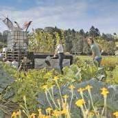 Wo Gemeinschaft und Gemüse gut gedeihen