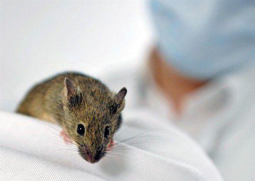 Im Vorjahr wurde in Österreich an 212.913 Mäusen geforscht.
