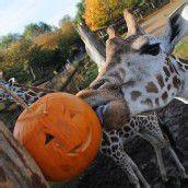 Halloween im Zoo von London