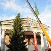 18-Meter-Baum schmückt den Marktplatz
