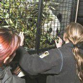 Panda-Bub Fu Hu auf langer Reise nach China
