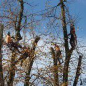 Rettung für Dorflinde in Alberschwende