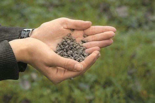 Der Stein des Anstoßes sind Pellets aus Hühnerkot. Foto: paulitsch