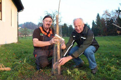 Josef Böhler und Ernst Sohm pflanzten den ersten Baum. Foto: wam
