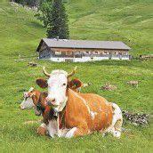 Im Visier: Keine Alp-Förderung