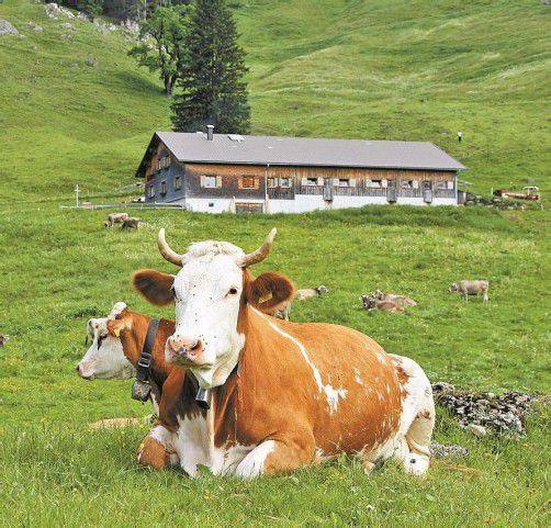 Kühe statt Flächen will die Landwirtschaftskammer fördern.