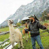 Lamas: An langer Leine lammfromm